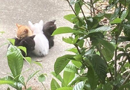 【ひゃー】玄関前にいた4匹の子猫兄弟、くっついてる様子が団子みたいw