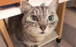 (ФωФ)「うちの猫は世界一可愛い」世界1かわいい猫の写真がたくさん集まるw