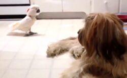 【ワン!】通り過がりに吠えてく鳥と、じっと見つめる犬が話題に「犬の表情w」