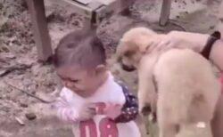 【爆笑】犬に怯える5才児、ペットボトル構えた瞬間豹変w