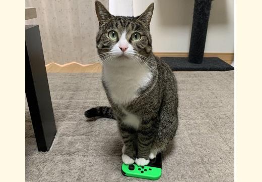 (ΦωΦ)<これで遊ぶなら私と遊んで」無言の主張が強すぎる猫達が可愛いすぎるw