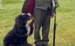 【動画】大統領インタビューの最中、ずっとかまってアピールしてる大統領の愛犬が話題にw