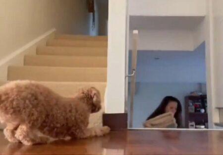 【そわそわ】ご主人を驚かせたくて待ち伏せする犬がたまらなくカワイイw