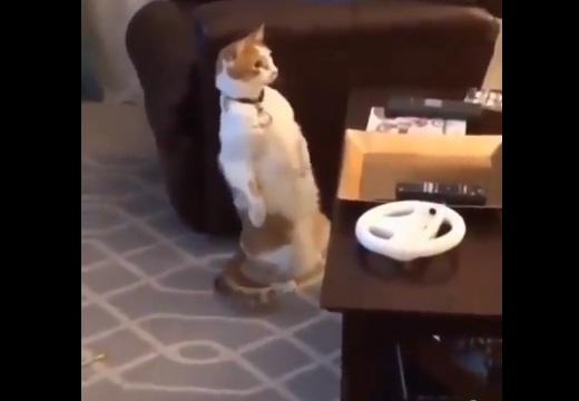【w】飼い主が消えるマジックを見た猫のリアクションが話題に「立ち困り現象w」
