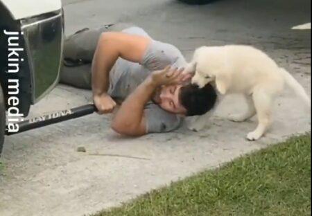 【ここぞとばかり】両手がふさがってる飼い主にじゃれまくる犬がカワイイw