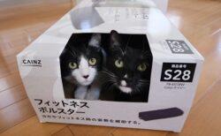 【w】空き箱に並んで入りカメラ目線!藤あや子さんちの保護猫くん達がカワイイすぎる