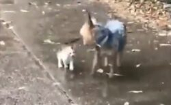 【泣いた】雨のなか捨て子猫を見つけた犬、自宅に連れて帰る