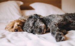 【目からうろこ】「どうしても起きられない」二度寝を阻止する簡単ライフハックが話題に!