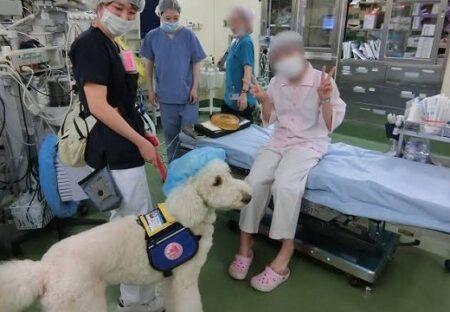 【癒やしのプロ】大学病院に勤務するセラピー犬が話題に「泣いちゃう」