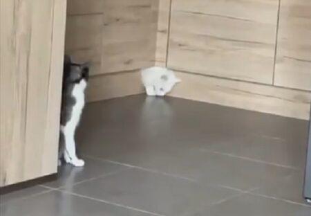 (ΦωΦ) とんでもない隙間から出てくる猫と、ドン引きで見つめる猫が話題にw