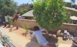 【爆笑】塀の上に庭のペットを狙うクマが!おばちゃんの行動が凄いw