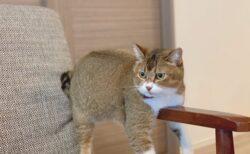 【ひや~】冷たい場所を発見し堪能する猫ちゃん達が話題にw