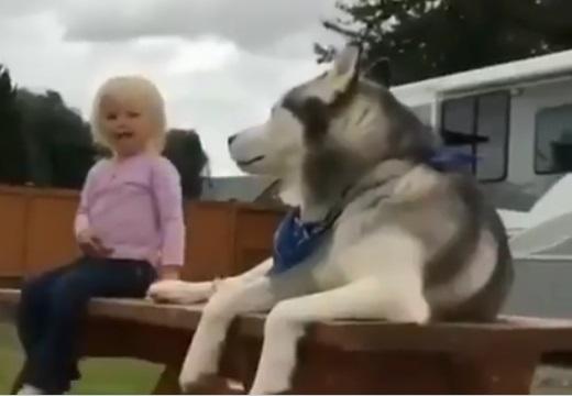 【女児と大型犬】大事な相手を守ろうとするハスキーの行動が話題に「やさしい‥」