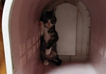 子猫「怖かった(泣」動物病院から帰宅、かごの隅っこにへばりついてる様子が話題にw