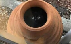 【きょろっ】真っ暗な中からこっちを見つめる黒猫が話題「かわいいがすぎるw」