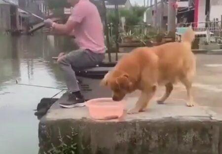【やさしい】飼い主の釣りに同伴した犬、魚と会話するような仕草のあと驚きの行動に