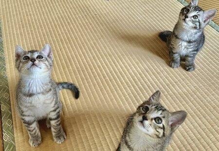 【ひゃー】洗濯物干してたら‥子猫達の熱い眼差しがカワイイすぎるw