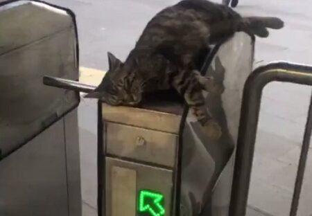 【なぜそこに?】改札機の上から動かない猫が話題にw