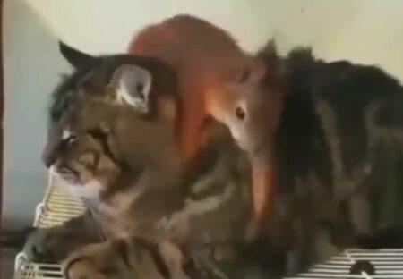 【動画】猫の事が大好きすぎるリスが話題に「たまらんw」