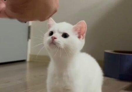 【!】大事なおもちゃの修理を待つ猫の表情が話題に「たまらんw」