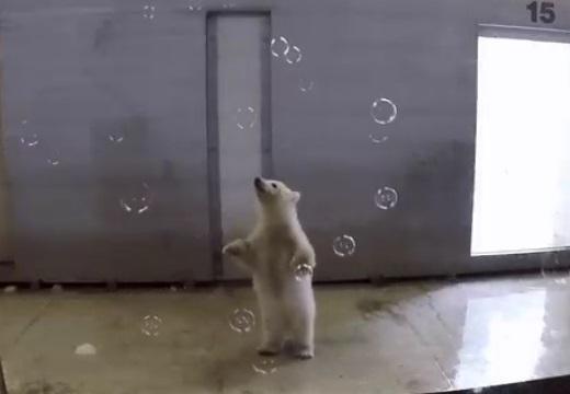 【・(ェ)・】しゃぼんで遊ぶクマの赤ちゃんが話題に「ずっと見ていたいw」