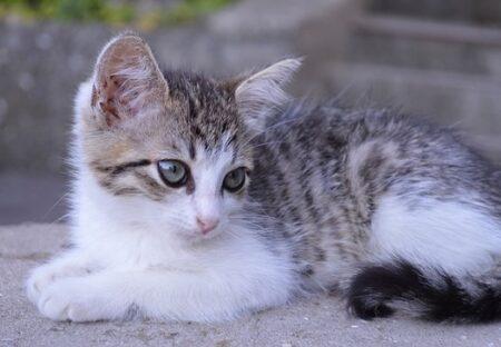 【捨て猫】やさしそうな人を発見し必死にアピール!無事保護される子猫達が話題に