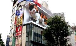 【動画】新宿に出現した「3D巨大ねこ」想像以上のクオリティにネット騒然