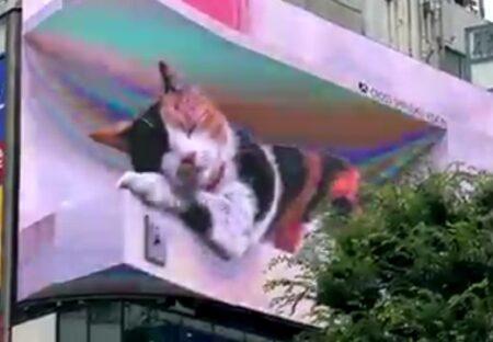 【動画】気持ちよさそうに眠る新宿東口のねこ、落ちそうになって慌てる様子が可愛いw