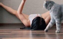 【動画】ヨガ中のお姉さんを見たもふもふ猫、おもむろに真似してみるw