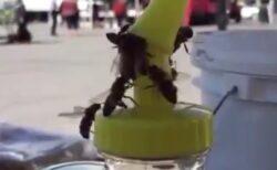 【動画】団結してはちみつを取り返そうとするミツバチ集団が凄い!