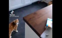 【えw】ねこ扉から知らない猫が!困惑した表情の猫とおずおずと帰ってく猫が話題に