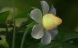 【いちご】花の真ん中が実に変化!意外な様子が話題に「ずっと見てる」「美しい・・」