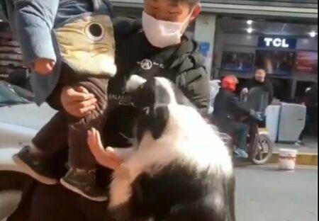 【ぼくもー!!】子供を抱っこした飼い主に抱っこをせがむ大型犬が可愛いすぎるw
