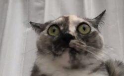 【動画】ゲリラ豪雨と雷!びっくり顔の猫が話題に「ごめん笑っちゃったw」