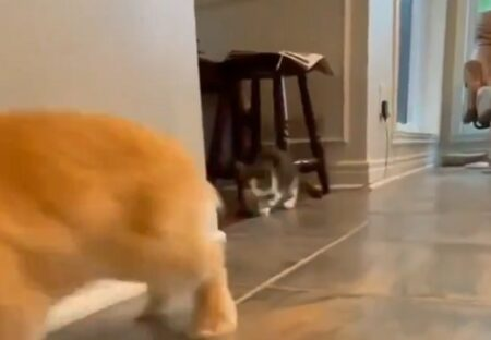 【動画】うさぎと暮す子猫のうさぎ化が話題にw「強烈にカワイイ!」