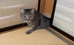 【にゃ】小さなねこ扉から出てくる大きなネコちゃんが話題に「しっぽw」