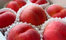 【若手農家さんの努力】今年の福島の桃が激ヤバに美味しい理由を桃農家の身内が暴露!