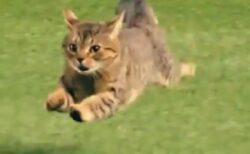 【躍動感w】球場に乱入した猫、スーパースローカメラで見てみると・・