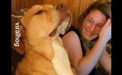 【たまらん】仕事中の主人の隣でひたすら睡魔と戦う犬が話題にw