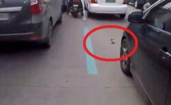 【間一髪】大渋滞の道路でひかれる寸前の子猫、渋滞をすり抜けてきたバイクに拾われる
