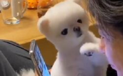 【けなげ】スマホの前に手を出しかまって主張する犬が可愛いすぎる!