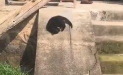 【黙々と】滑り台の楽しさに目覚めた猫さん、エンドレスw