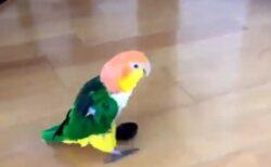 【w】リズム感がすごい鳥が話題に「嬉しそう!」「見てるだけで楽しいw」