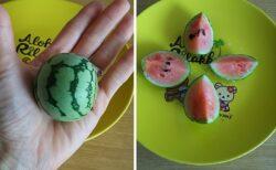 【可愛い】食べたすいかの種を栽培してみたら・・しっかり甘いミニすいかに!