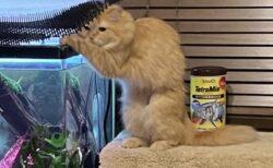 【表情w】イタズラしようとして声をかけられフリーズした猫が話題に「決定的瞬間!」