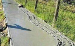 【ザクザク】固まる前のコンクリートの上を派手に進んでいくカメが話題にw