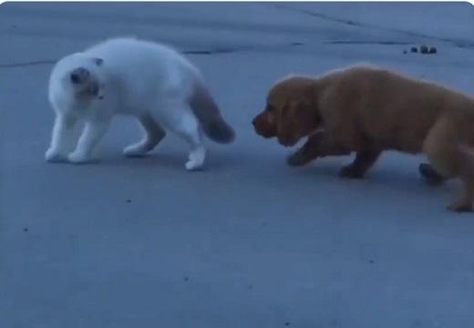 【にゃ!!】尾行を猫に叱られた犬、リアクションが話題に「何このとぼけ方w」