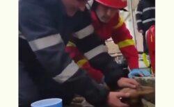 【泣いた】意識がない犬に心肺蘇生を施し回復させる消防士さん達が話題に