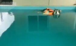 【ぷかーん】救命胴衣を着て水面を漂う犬が話題に「表情w」