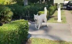 【w】ルンルン感がすごい犬が話題に「スキップしてる!」「嬉しそう」